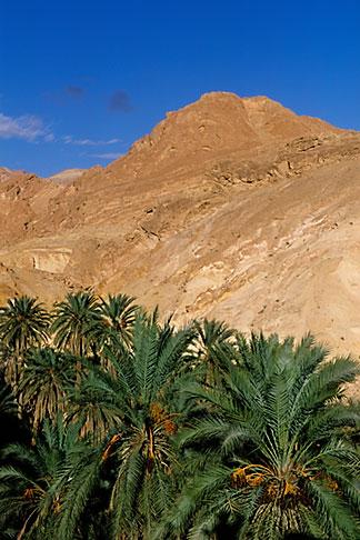 image 3-1100-48 Tunisia, Oasis and palms
