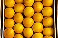 stall stock photography | Uruguay, Colonia del Sacramento, Oranges in market stall, image id 8-803-4723