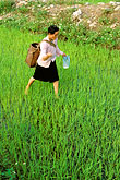 one person stock photography | Vietnam, Lai Chau, Seeding rice paddies, image id S3-195-4