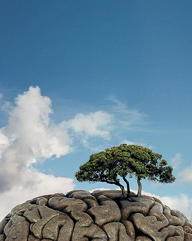 proto magazine, solitary oak tree