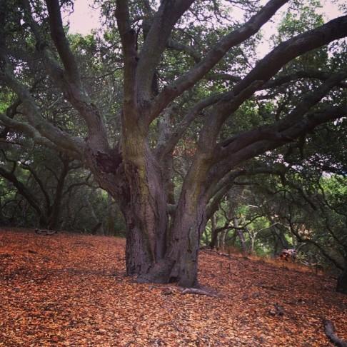 Sobrante Ridge Regional Preserve