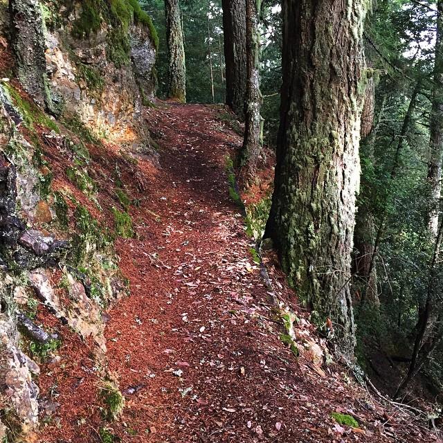 Forest Quiet